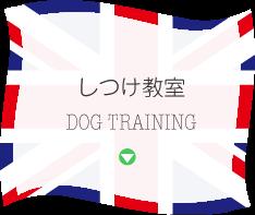 しつけ教室 DOG TRAINING